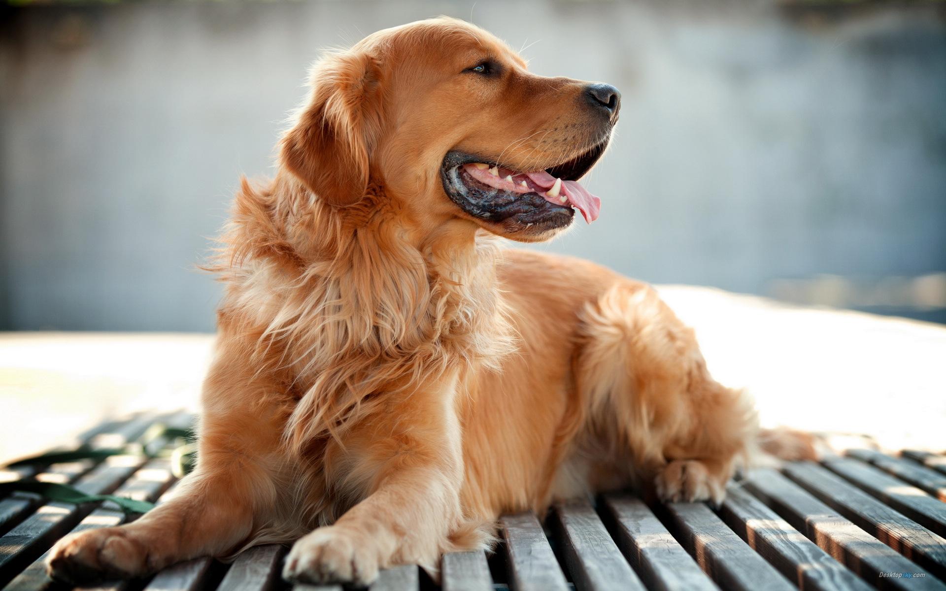 狗价格排名_十大忠诚的狗排名-最不忠心的五种狗,什么狗最干净最好养,宠物 ...