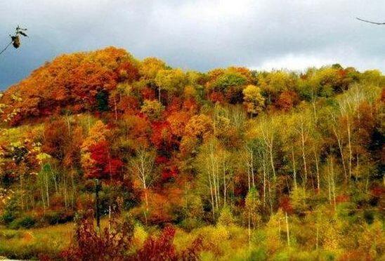 全世界最美的地方_中国十大最美森林,犹如精灵的世界修身养性的好地方_十大排行榜