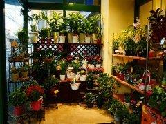 花店的名字怎么起才特别 最好听的富有诗意的花店名字大全