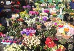 花店名字怎么取比较好 唯美高端的花店名字大全